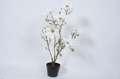 Magnolia in pot crème 88 cm