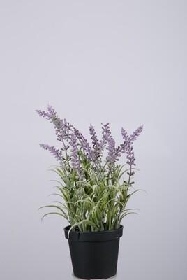 Lavendel in pot 25 cm