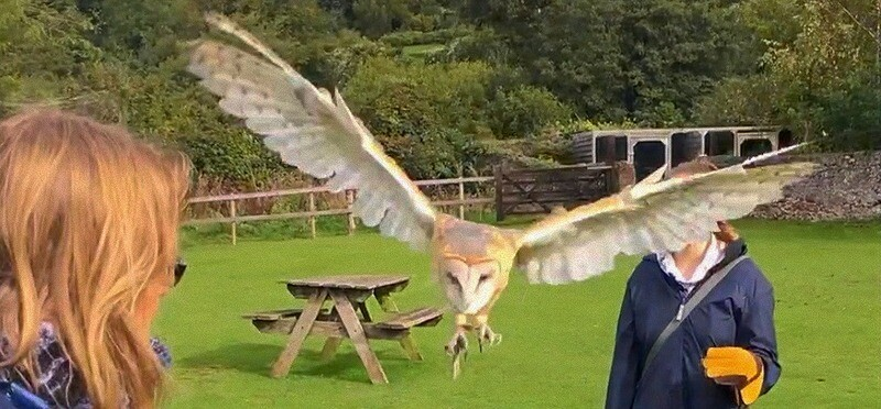 Fly Back to Nature with our Owls and Hawks - Family Two Adults and Two children