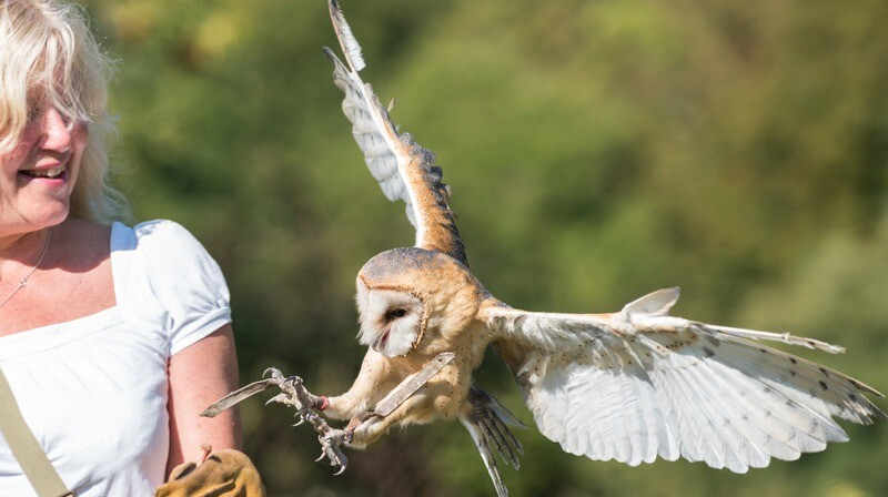 Fly Back to Nature with our Owls and Hawks - One Adult