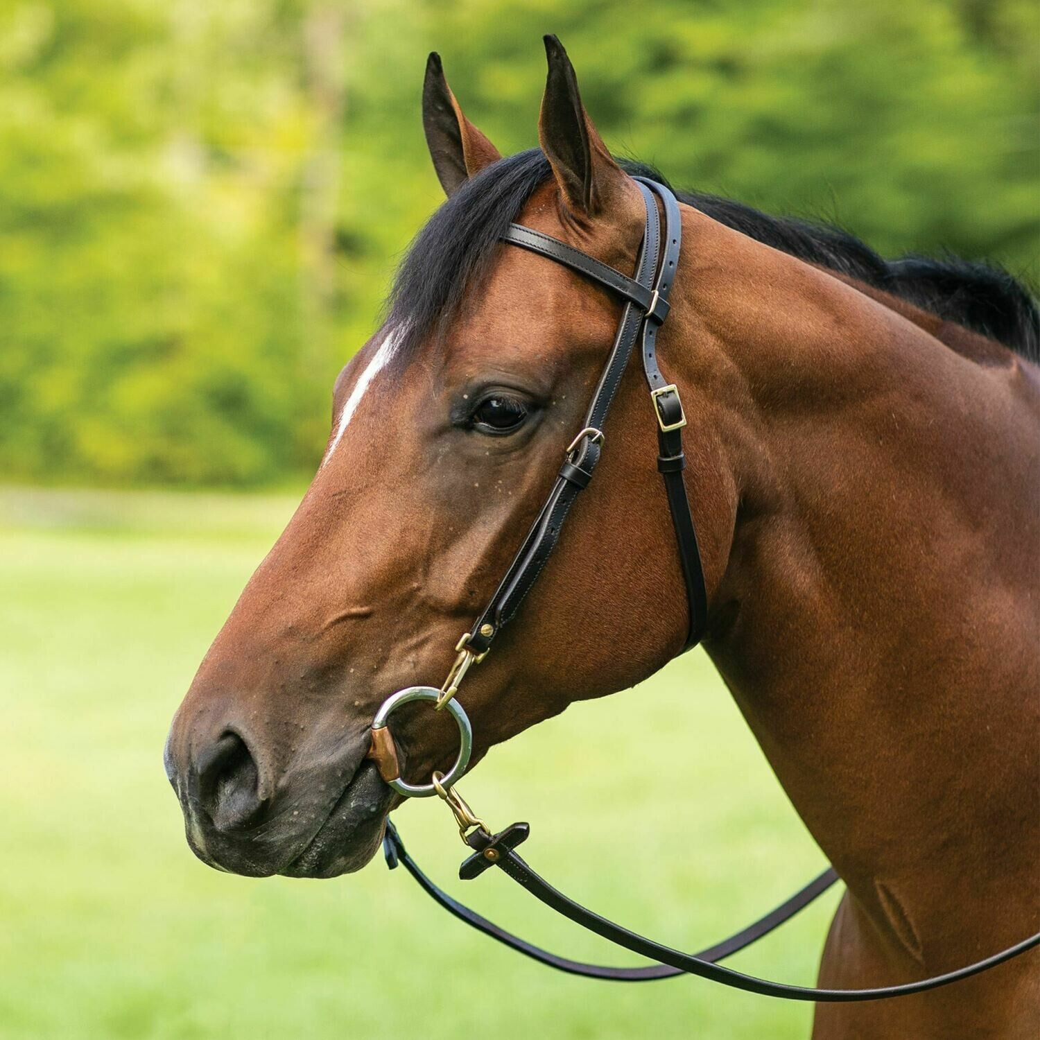 00219 Billy Royal Work Bridle Headstall
