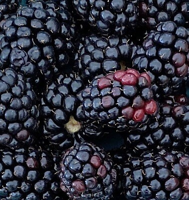 LOCAL! Blackberries  Choose Pack Size