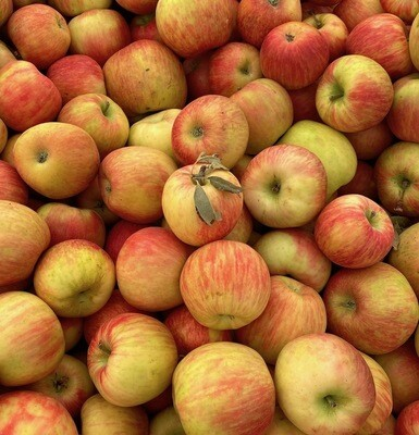 JUST PICKED! Honeycrisp Apples Per lb.