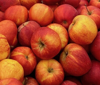 NEW CROP! Gala Apples, Unwaxed EACH (@$.98/lb.)