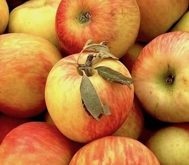 SCREAMIN' DEAL! Honeycrisp Apples 20 Pound Box for 19 Bucks!