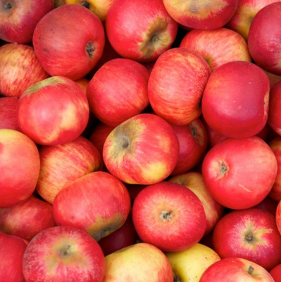 NEW! Gravenstein Apples EACH (@$2.99/LB)