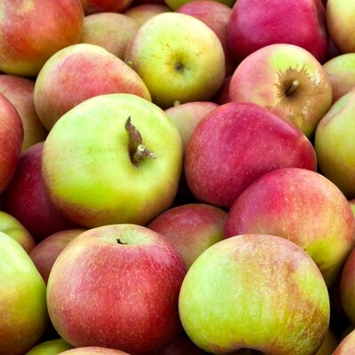 Jonagold Apples  EACH (@1.99/lb)