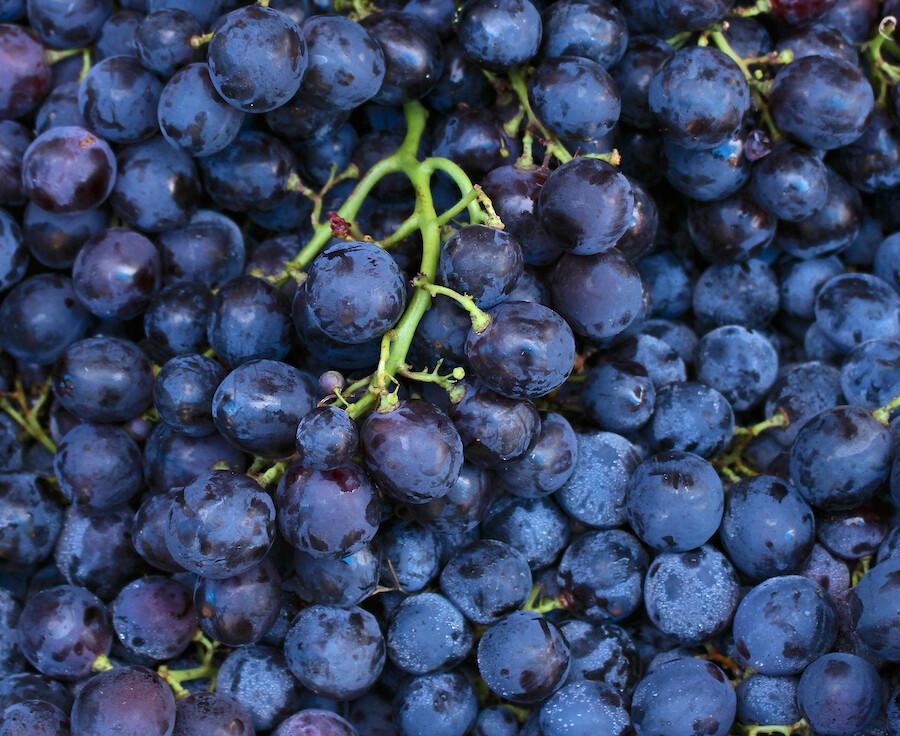 LOCAL! Concord Grapes, ORGANIC Per lb.