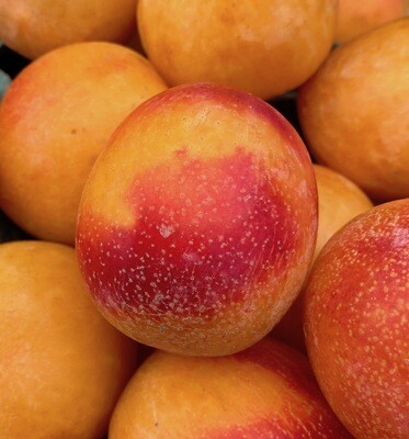 LOCAL! 'Gold Rush' Pluots Per lb.
