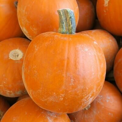 Pumpkins- Sugar Pie EACH
