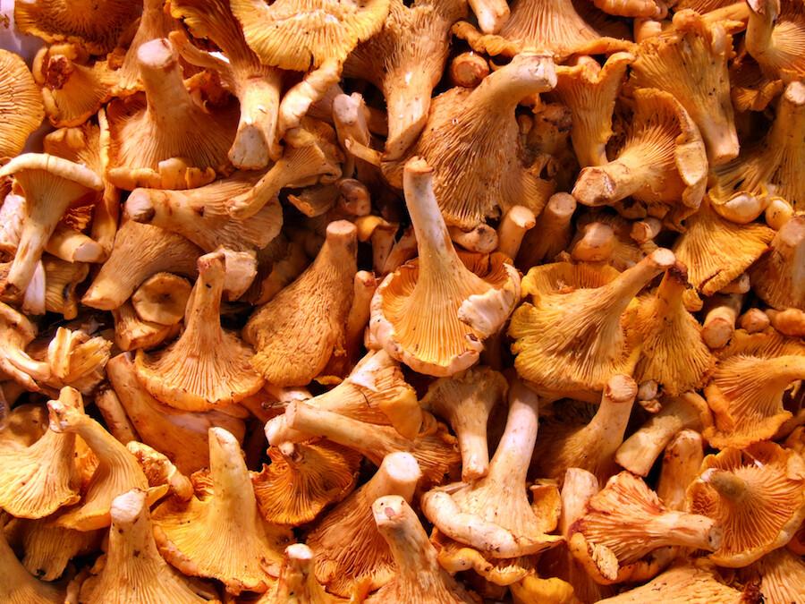 Locally Foraged Wild Chanterelle Mushrooms One Half Pound