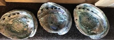 Abalone Shell by Nicholas