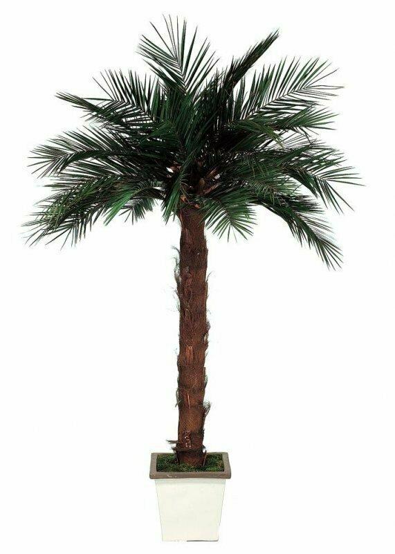 Пальма 200 см.