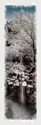 Watercolour Blossom