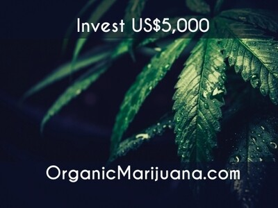 10,000 Shares in OrganicMarijuana.com