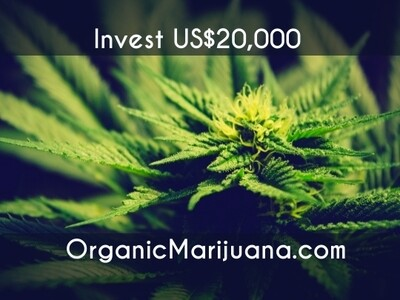 40,000 Shares in OrganicMarijuana.com