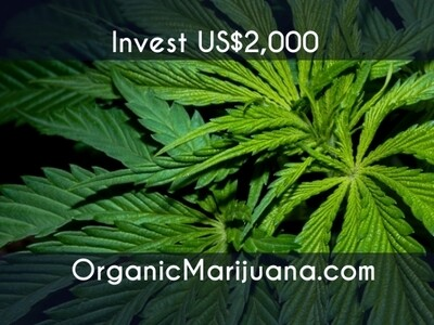 4,000 Shares in OrganicMarijuana.com