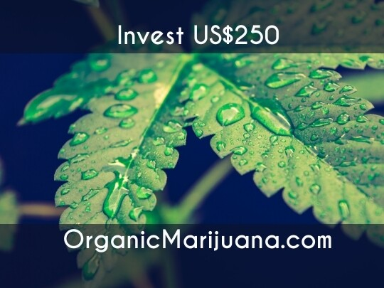 500 Shares in OrganicMarijuana.com