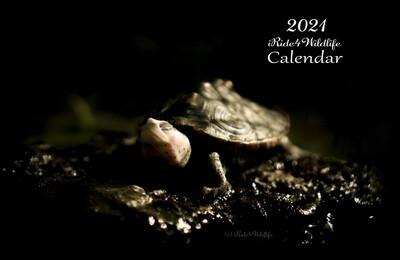 2021 iRide4Wildlife Calendar