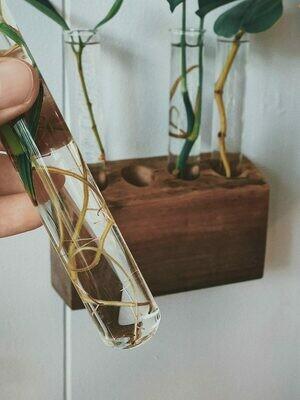 Glass Propagation Tube