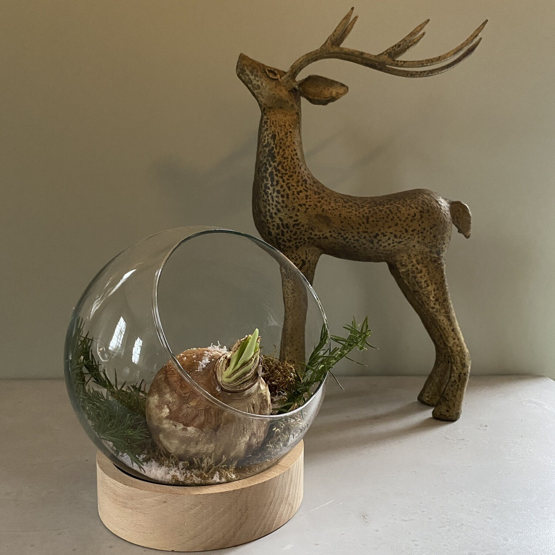 Glazen stolpbol met amaryllis