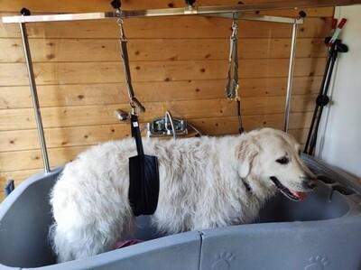 Big dog support strap