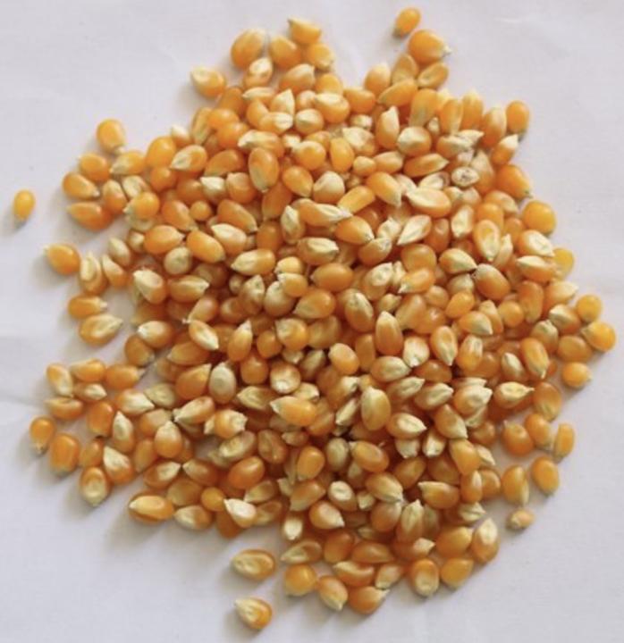 Pop Corn (Dango)