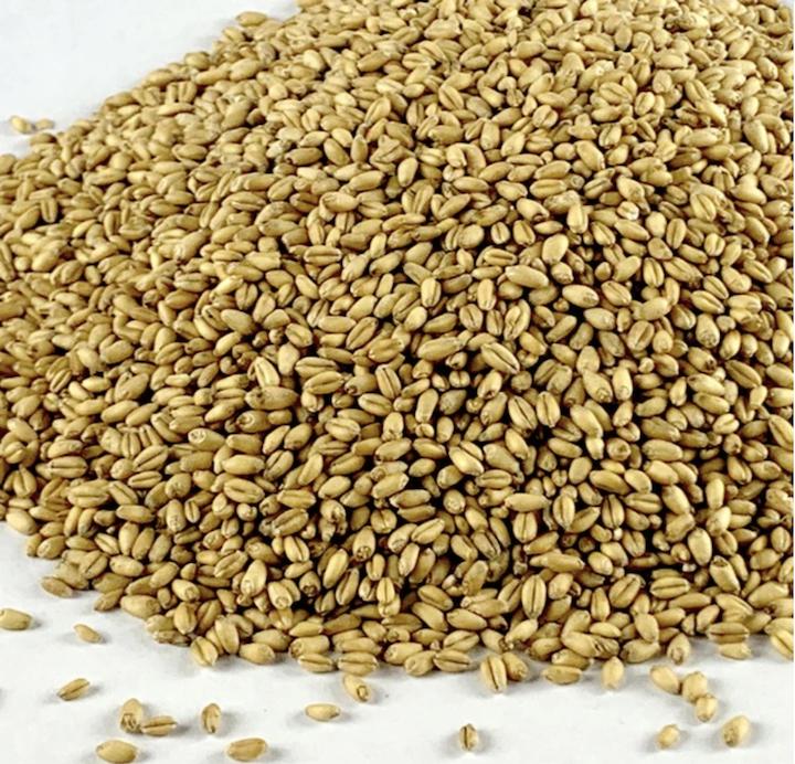 Sunny whole wheat