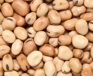 Ziyad small fava beans 16 oz