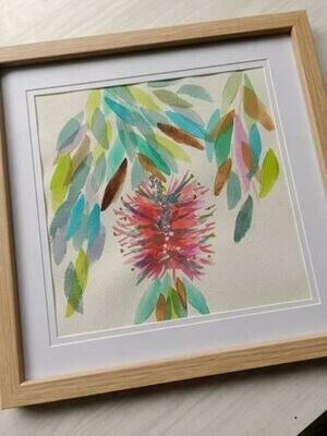 Original Callistomen Watercolour -  8 x 8 in on cotton paper - Framed