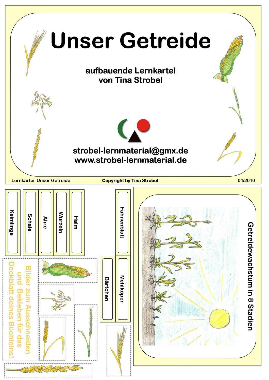 Unser Getreide Lernkartei - aufbauend