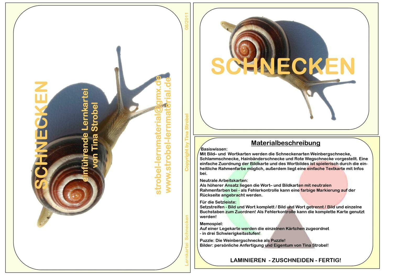 Schnecke Lernkartei - einführend