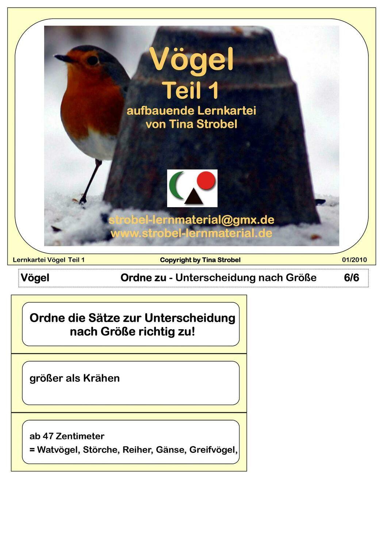 Vögel Lernkartei - aufbauend 1
