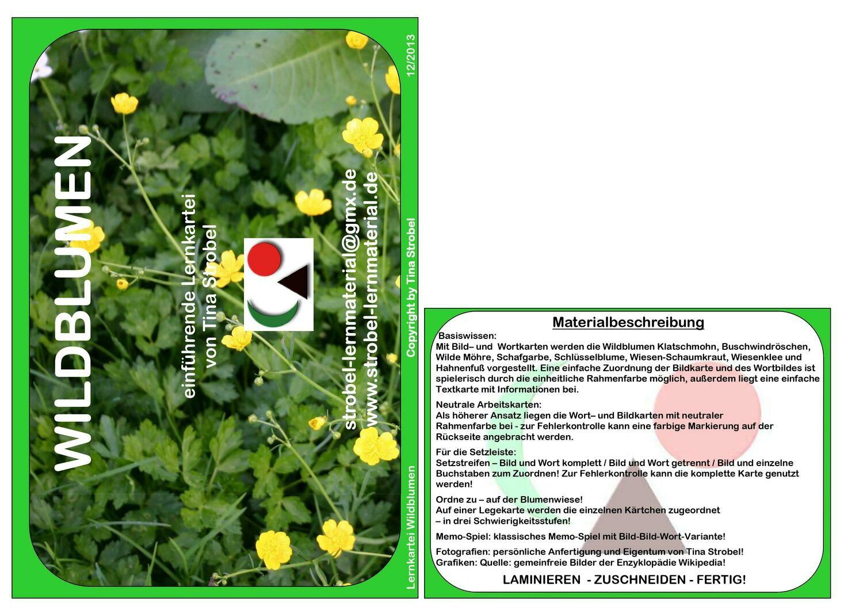 Wildblumen Lernkartei - einführend