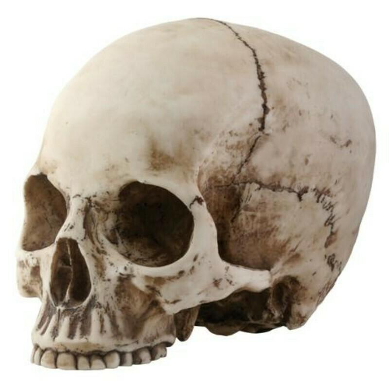 Skull Head Y8035