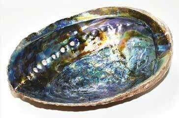 """Abalone Shell 6-7"""""""