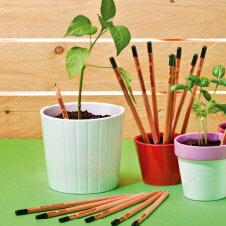 Bleistift mit sprießenden Pflanzen