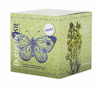 ButterflyKit - Raupen - Großer Kohlweißling
