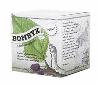 Bombyx - Raupen - Seidenspinner