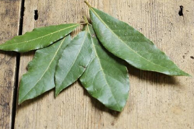 Bay leaves - fresh (Organic)
