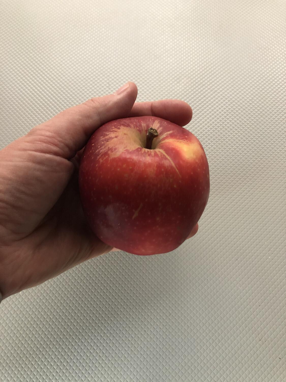 Apples 1kg (red)
