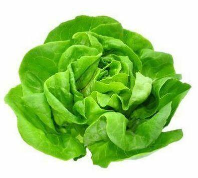 Butter Lettuce (Head) (Organic)
