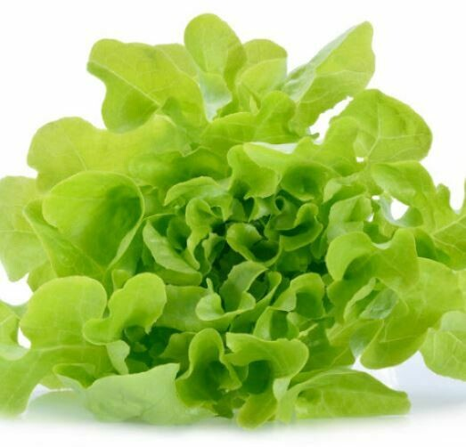 Green Oak Lettuce (Head) (Aquaponic Organic)