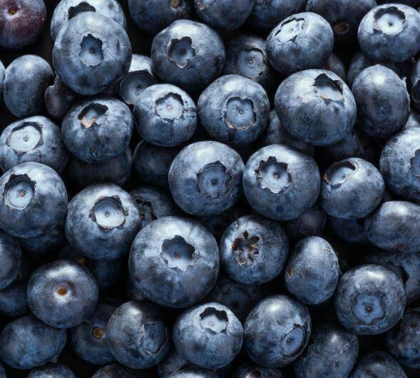 Fresh Blueberries 3kg