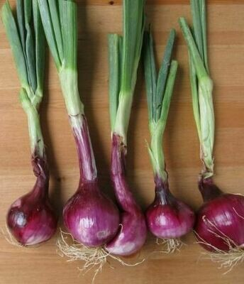 Onions - Red (Organic)