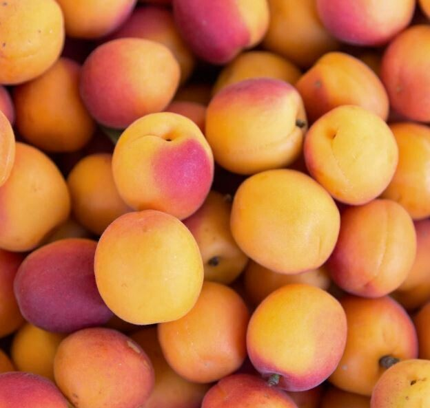 Apricots (approx 12)