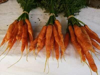 Carrots (Organic) Rock Ridge Farm