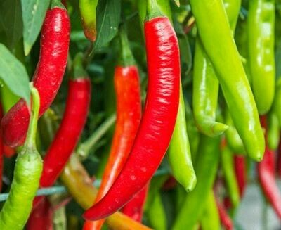 Chilies - mixed red and green (Organic) 150g
