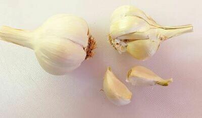 White Earth Garlic (1 head)