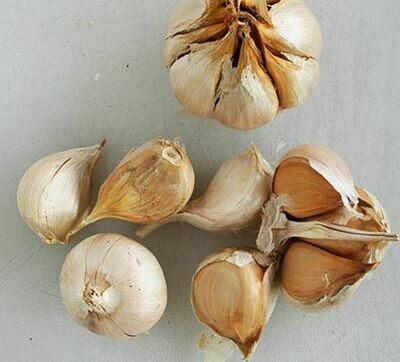 Giant/Elephant Garlic (1 head)